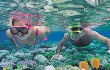 Nghe nói vịnh san hô ở Nha Trang đẹp lắm, mà nay chỉ cần chưa đến 1 triệu đồng/người là có thể tản bộ thảnh thơi ngắm đáy đại dương kỳ bí rồi