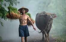 Cùng ngắm loạt hình ảnh đẹp nhất về đa dạng văn hóa, đại diện Việt Nam nổi bật với trâu đồng lúa nước quá đỗi thân thuộc