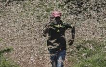 Hàng NGHÌN TỈ con châu chấu bay rợp trời: Đại dịch khủng khiếp chưa từng thấy, và đằng sau là thông điệp đáng sợ với toàn nhân loại
