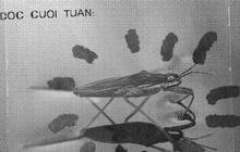 Đọc cuối tuần: Những bí ẩn của loài nhện nước viễn dương - sinh vật đến thần thánh cũng không thể nhấn chìm