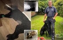 Một ngày bỗng thấy cún cưng của mình nôn ra 4 quả bóng golf, chủ nhân tá hỏa mang đi kiểm tra và phát hiện thêm vô số thứ khác trong ổ bụng