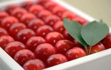 """Soán ngôi đầu hoa quả nhập siêu đắt tháng 7: Gọi tên cherry """"đặc sản"""" của Nhật, về Việt Nam giá """"chạm nóc"""" 6,6 triệu đồng/kg"""