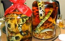 """10 loại đồ uống truyền thống """"kinh dị"""" nhất trên thế giới, Việt Nam cũng có món rượu rắn khiến không ít người sợ hãi"""