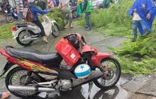 TP.HCM: Cây phượng bật gốc, đè trúng một người đi xe máy