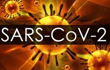 Cập nhật Covid-19: Thế giới hơn 21,3 triệu ca mắc, Mỹ nhiều ca tử vong