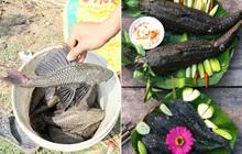 Cá lau kính - loại thực phẩm sở hữu vẻ ngoài xấu xí nhưng thơm ngon tới mức được người miền Tây so sánh như thịt gà