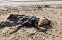 Xác 'quái vật kỳ lạ' dài 4,5m có chi và lông dạt vào bờ biển khiến nhiều người khiếp sợ, dân mạng nổ ra tranh cãi vì không biết là loài gì