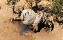 """""""Vụ án"""" thảm họa bảo tồn khiến hàng trăm con voi chết hàng loạt cuối cùng đã xuất hiện manh mối"""