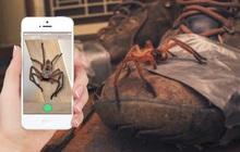 Pokemon GO phiên bản Úc: App giúp người dân nhận diện rắn, rết, nhện độc để tránh... mất mạng