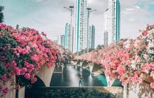 Gần Hà Nội lại có thêm một cây cầu hoa giấy, chụp lên ảnh đẹp như tranh vẽ