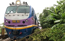 Cây đổ vào đường ray do ảnh hưởng của bão số 5, tàu SE3 phải dừng giữa đường gần ga Huế