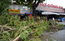 Cây ngã la liệt khiến 1 người chết và nhiều người bị thương, toàn tỉnh Thừa Thiên Huế mất điện sau khi bão số 5 đổ bộ