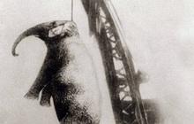 Bức hình như tranh vẽ nhưng lại là ảnh chụp và phía sau là câu chuyện con voi bất hạnh nhất trong lịch sử khiến nhiều người rơi lệ