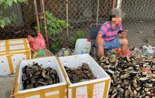 """Thực hư cua Cà Mau 50.000 đồng/3 con bán đầy đường, """"bao ăn"""""""