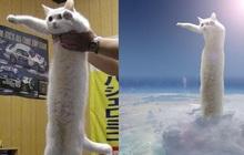 """Nobiko - chú mèo huyền thoại Internet với bức ảnh meme """"Con mèo dài ngoằng"""" qua đời ở tuổi 18"""
