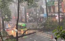 Nạn nhân bị cây xanh bật gốc đè trúng trong mưa lớn ở Sài Gòn chấn thương nặng, đã phẫu thuật gấp