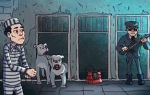 Bạn chọn căn phòng nào để tẩu thoát: Có chó dữ canh - bom nổ - cảnh sát cầm vũ khí?