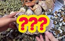 """Loại hải sản được cho là ngon hơn cả tôm hùm ở Việt Nam, vì hiếm có khó tìm nên được rao bán với giá """"đắt xắt ra miếng""""?"""