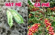 """Những loại thực phẩm chúng ta hay ăn được trồng trọt và thu hoạch như thế nào: Xem ảnh trước - sau mà thấy khác """"một trời một vực"""""""