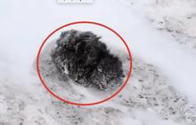 Phát hiện con vật đông cứng giữa đám tuyết trắng không thể nhận ra giống loài gì, người đàn ông can đảm đem về nhà và điều kỳ diệu xảy ra