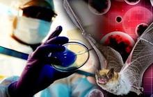 """Phòng thí nghiệm Vũ Hán phủ nhận tin đồn """"bệnh nhân số 0"""", tiết lộ chi tiết lạ về ca nhiễm bệnh đầu tiên"""