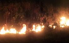 Rừng thông trên núi Đại Bình cháy dữ dội