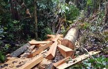 Quảng Bình: Sẽ xử lý nghiêm vụ phá rừng đệm di sản thế giới Phong Nha - Kẻ Bàng