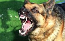 Chó dại chạy vào nhà cắn nữ sinh lớp 10 tử vong