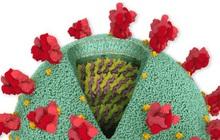 Chi tiết bộ gen SARS-CoV-2: Những tên khủng bố chiếm dụng tế bào phổi người