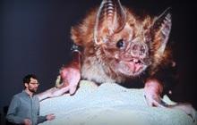 Tại sao virus SARS, MERS và SARS-CoV-2 đều cần một động vật trung gian trước khi lây sang người?