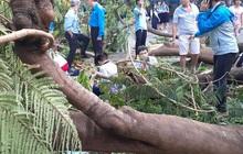 Sở Xây dựng yêu cầu rà soát cây xanh toàn TP HCM sau vụ cây phượng đè chết 1 học sinh
