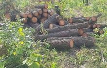 Vụ hơn 4 ha rừng phòng hộ cách trụ sở UBND xã 1km bị chặt phá: Công an vào cuộc điều tra