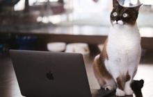 """Nhật Bản: Họp từ xa xong sếp vẫn """"bắt"""" online chỉ để ngắm mèo nhà nhân viên"""