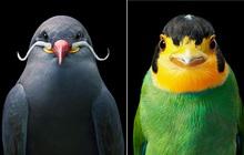Đầu cắt moi đến râu quai nón - chùm ảnh chân dung cực nghệ của một số loài chim siêu hiếm có khó tìm