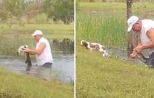 Cụ ông 74 tuổi nhảy xuống ao, tay không cậy mồm cá sấu để giải cứu chó cưng