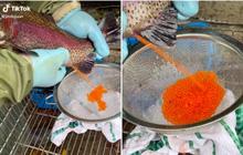 Cận cảnh quá trình người nước ngoài thu hoạch trứng từ một con cá hồi còn sống, đó giờ ăn nhiều nhưng chưa chắc ai cũng biết