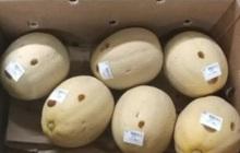 """Đi siêu thị tiện tay chọc thủng 13 quả dưa, người phụ nữ """"rảnh rỗi sinh nông nổi"""" bị cảnh sát tóm về đồn"""
