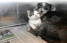 Chó nhận mèo làm con nuôi và câu chuyện về tình mẫu tử chạm tới trái tim tất cả mọi người