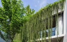 Mất 4 năm hoàn thiện, căn villa ở Sài Gòn xanh mướt như một khu rừng nhỏ, đi vào bên trong càng mê