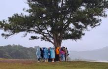 """Nhóm bạn """"giúp"""" cây thông cô đơn ở Đà Lạt không còn cô đơn nữa nhưng ai xem xong cũng hốt hoảng vì nguy hiểm"""