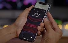 Apple xác nhận iPhone 11 có thể bị lỗi cảm ứng, đây là cách kiểm tra máy của bạn có dính lỗi hay không