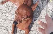 Đến lượt một chú chó ở tiệm photo bị lập page anti vì tội hay dí khách, 4 ngày đã có 3,5K followers