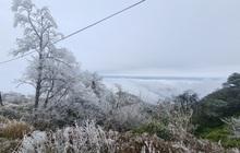 Các phương án đối phó với rét đậm, rét hại và băng tuyết