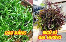 """Những loại rau mọc dại khắp các vùng quê Việt Nam cực hiếm người biết, ngày nay được săn lùng vì """"quý như vàng"""" (Phần 2)"""
