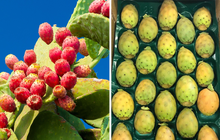 Một loại quả mọc dại ở Việt Nam nhưng sang nước ngoài lại trở thành hàng quý, được bày bán rất xịn trong siêu thị