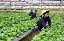 Năm 2025, thu nhập nông dân Hà Nội đạt 65 triệu/người