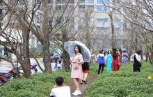 """Người dân đổ xô đến check-in """"con đường mùa đông"""" đẹp như trong phim Hàn ở Đà Nẵng"""
