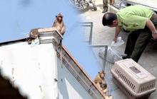 """Bắt được 6 con khỉ """"đại náo"""" khu dân cư Sài Gòn, còn nhiều con đang bỏ trốn nơi khác"""