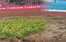 """Vườn rau ở SVĐ Lạch Tray """"bay màu"""" sau khi nhận gạch đá từ cộng đồng mạng"""