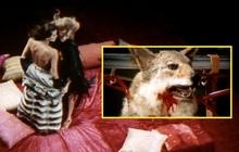 Rùng mình nghi án giết hại chó thật trong phim kinh dị, tàn nhẫn đến đâu mà đạo diễn bị phạt 2 năm tù?